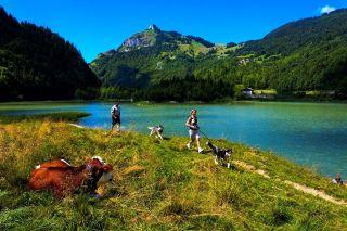 Nordic dogs activities