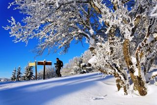 Snowshoeing guided tours