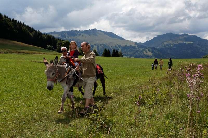 Balade avec les ânes Plateau des Moises