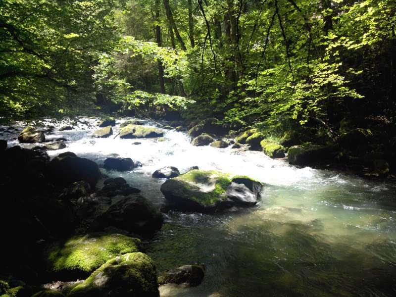 The Brevon river