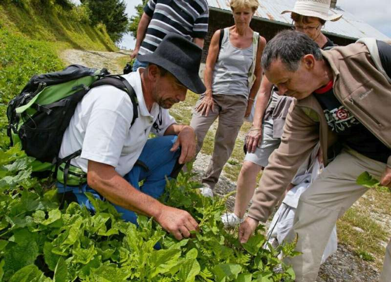 sortie plantes sauvages Vallée Verte